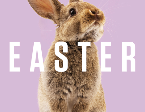 Your 2019 Easter Hub