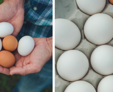 Meet 4 North Carolina Egg Farming Families