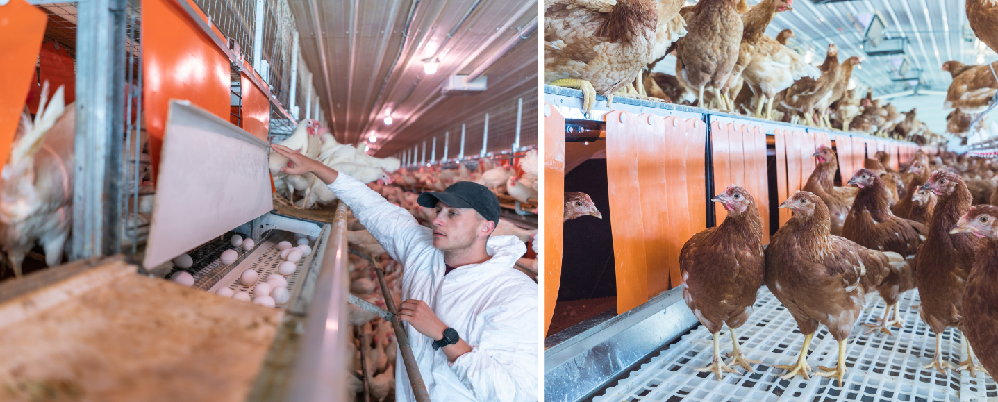 5 Ways Egg Farmers Care for the Environment